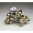 Galena on Pyrite Bulgaria M04118